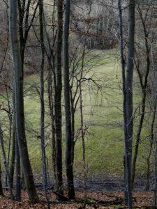 Bäume am Rand einer Wiese