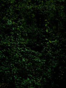Deciduous forest with green leaves, dark, shady