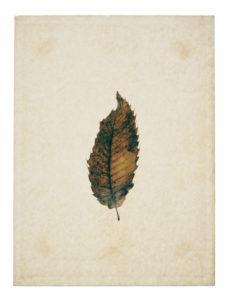 Beech leaf on yellowed paper, beige