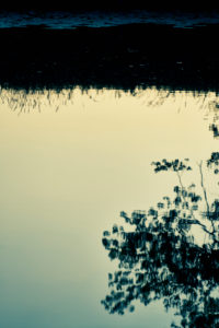 Shore on a river with reflexion of a tree in the water
