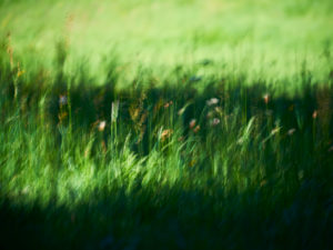 Meadow with meadow flowers, blurred, in the sunshine, shadow, blurred