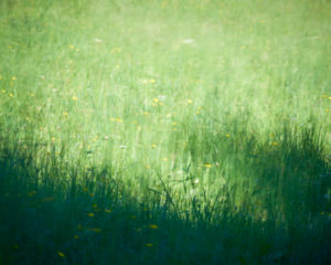 Meadow with yellow meadow flowers, blurred, in the sunshine, shadow, blurred