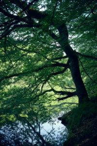 Über das Wasser hängender Ast eines Baumes mit Spiegelung