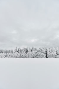 snowy fir forest on a hill in winter  with overcast sky