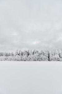 verschneiter Tannenwald im Winter auf einem Hügel mit bedecktem Himmel