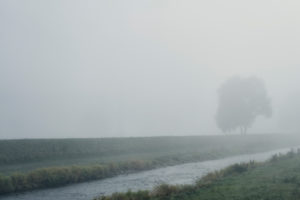 River with riverside and tree in the fog on a canal