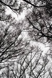 Äste und Zweige im Gegenlicht, Silhouette, weißer Hintergrund, von unten
