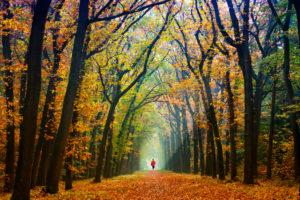 Forest path, avenue, autumn, person,