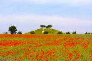 Poppy field on Kronsberg, Hannover-Laatzen, Lower Saxony, Hanover