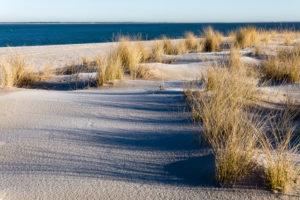 Seagrass on the beach in Sylt, Schleswig-Holstein