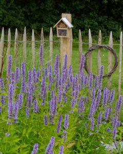 Kleines Insektenhotel aus Bambusröhrchen und Zapfen, auf Staketenzaun, vorne Bienenweide