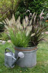 """Herbstliche Gräser (Pennisetum Setaceum) """"Rubrum"""" und """"Fountain Grass"""" im Zinktopf und alter Gießkanne"""