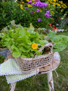 Various freshly picked salads in a decorative basket
