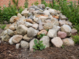 Pile of stones in the garden as a biotope for lizards