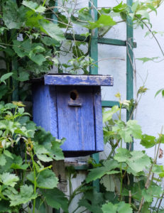Blue wooden bird box between the vines