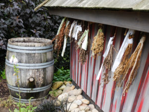 Herbs hang to dry on the witch's house in the garden