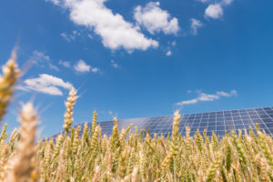 Solar plants in the cornfield under blue sky