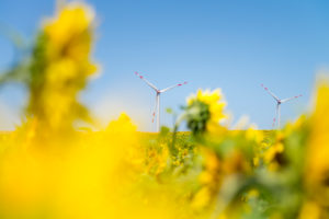 Wind turbines in the sunflower field under blue sky
