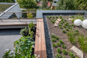 Modern roof terrace with planted flat roofs and outdoor bench