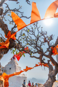 Orangefarbene pennants and flags with twisted branches at the monkey temple.