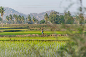 Indian boy runs through rice field