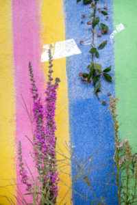 purple flowering plant and a branch are taped to a colorful striped wall