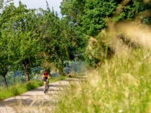 Rennradfahrer auf schmaler Bergstraße im Mittleren Schwarzwald, Gemeinde Freiamt, Baden-Württemberg