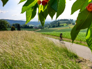 Racing cyclist on a narrow mountain road in the Middle Black Forest, near Emmendingen, Sexau Baden-Württemberg