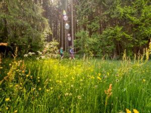 Wandern auf dem Zweitälersteig, Weg in der Nähe des Landwassereck