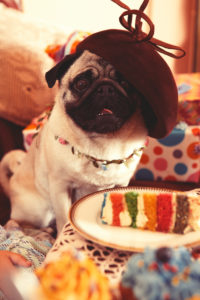 Pug with hat sitting on a party table cake in front presents in background