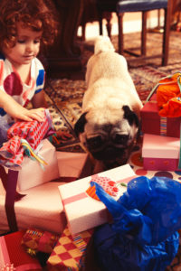 Party Girl und pug sitting on a patterned carpet on unpacking presents