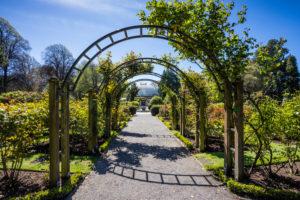 Rose Garden, rose arch at Christchurch Botanic Gardens, New Zealand South Island