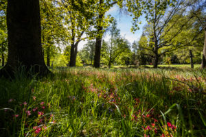 Flower field in Christchurch Botanic Gardens, New Zealand South Island