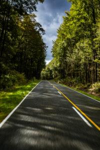 Straße durch Wald, Highway 7, Südinsel Neuseeland