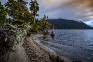 Shore with tree root on Lake Brunner, South Island New Zealand