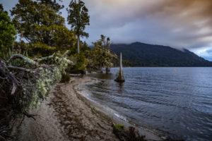 Ufer mit Baumwurzel am Lake Brunner, Südinsel Neuseeland