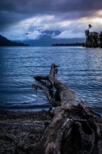 Baumstamm am Ufer des Lake Brunner, Südinsel Neuseeland