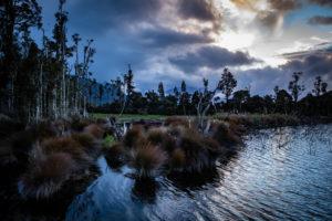 Evening mood and vegetation on Lake Brunner, South Island New Zealand