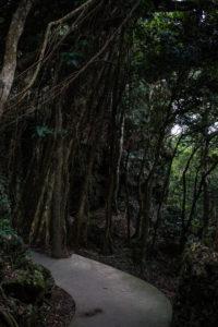 Weg im Kenting National Forest Recreation Area