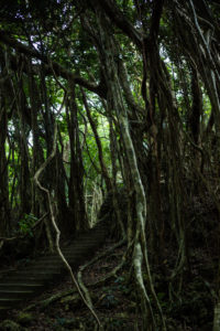 Staircase in the jungle of the Kenting National Forest Recreation Area