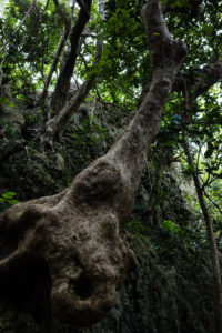 Roots in the Kenting National Forest Recreation Area