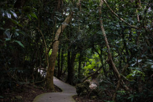 Path in the Kenting National Forest Recreation Area