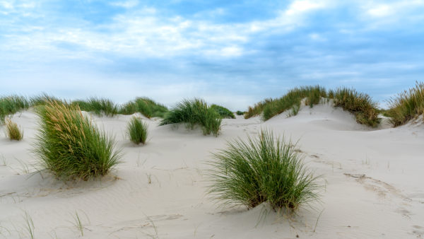 Europe, Germany, Schleswig-Holstein, North Frisian island, Nordfriesland, North Sea, Amrum, dune grass and sand landscape