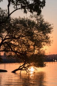 Sonnenaufgang an der Müritz, Baum im Wasser