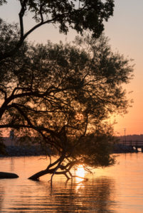 Sunrise at the Müritz, tree in the water
