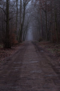Autumn, forest, road, fog,