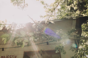 Garden, blossoming tree, sun, back light