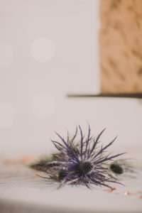 Table, blue thistle, blur,
