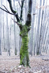 Moss-covered tree in the forest,