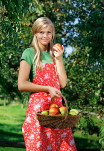 Woman, young, basket, apples, harvest,